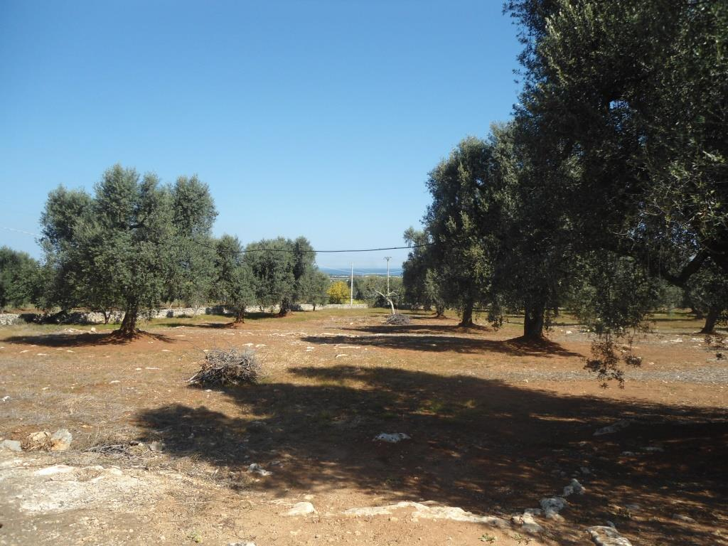 Olive Grove with Sea View for Sale in Carovigno