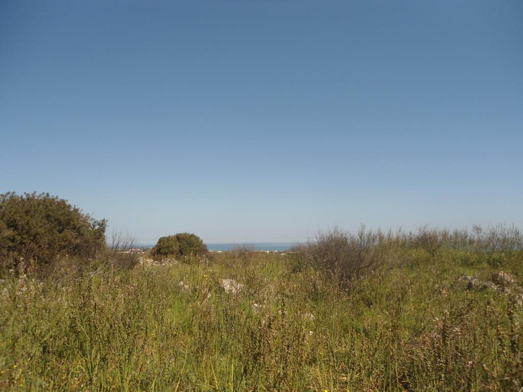 Plot of Land with Sea view olive grove for sale