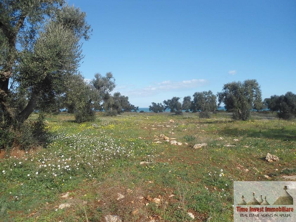 Olive Grove Sea View in Contrada Bufalaria